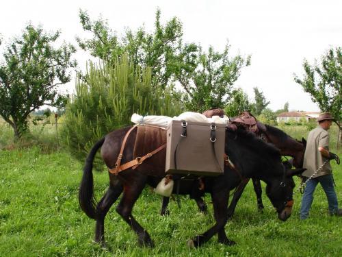 Manche mit Pferd